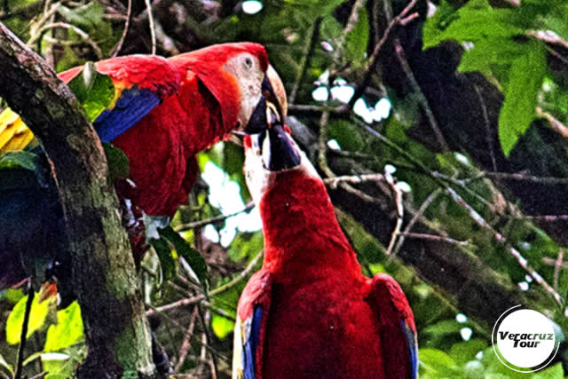 Hospedaje en la reserva ecológica Nanciyaga, Veracruz
